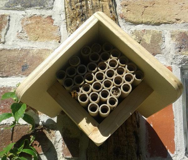 chalet_a_abeilles_solitaires_tubes