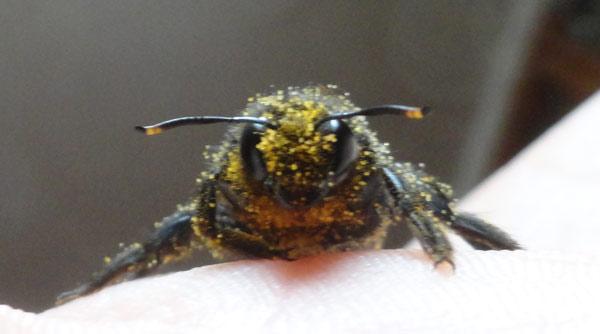 Une abeille qui avait besoin de l'aide